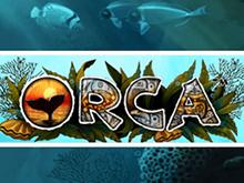 Аппарат Orca онлайн в казино